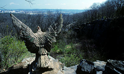 Eagle at Eagle's Nest